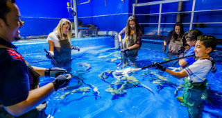 Get closer with Dubai Aquarium & Underwater Zoo's Shark Family  with Shark Trainer Experience